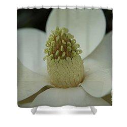 Magnolia Blossom 4 Shower Curtain