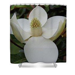 Magnolia Blossom 6 Shower Curtain