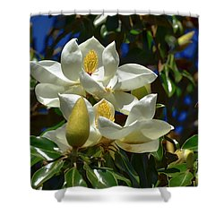 Magnolia Blossoms Shower Curtain by Kathy Baccari