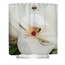 Magnolia Fans Shower Curtain