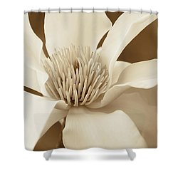 magnolia flower in sepia two shower curtain by jennie marie schell