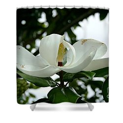 Shower Curtain featuring the photograph Magnolia by John Black