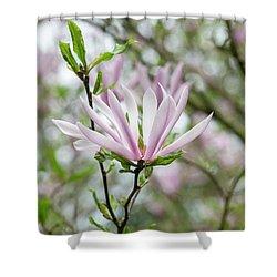 Magnolia Judy Shower Curtain
