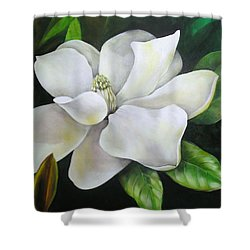 Magnolia Oil Painting Shower Curtain by Chris Hobel