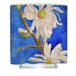 Magnolia Stellata Blue Skies Shower Curtain by Beverley Harper Tinsley