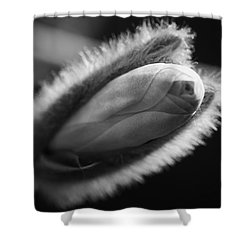 Magnolia Stellata Bud Shower Curtain