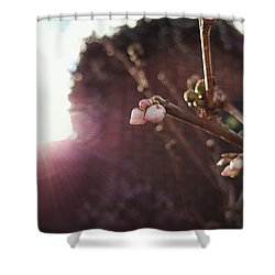 Magnolia To Be Shower Curtain