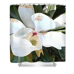 Shower Curtain featuring the photograph Magnolia Tree Bloom by Debra Crank