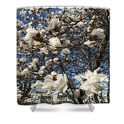 Shower Curtain featuring the photograph Magnolia Tree In Blossom by Patricia Hofmeester