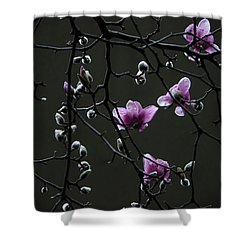 Magnolias In Rain Shower Curtain by Rob Amend
