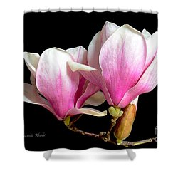 Magnolias In Spring Bloom Shower Curtain