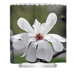 Magoilla Shower Curtain