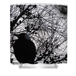 Magpie In A Sheoak Shower Curtain