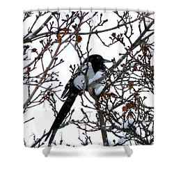 Shower Curtain featuring the photograph Magpie In A Snowstorm by Will Borden