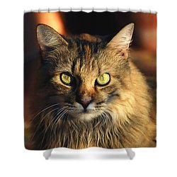 Main Coone Shower Curtain by David Lee Thompson