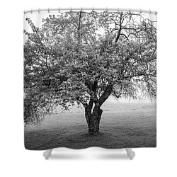 Shower Curtain featuring the photograph Maine Apple Tree In Fog by Ranjay Mitra