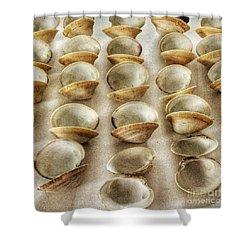 Maine Clam Shells Shower Curtain