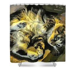 Shower Curtain featuring the photograph Maine Coon Cat At Play by Constantine Gregory