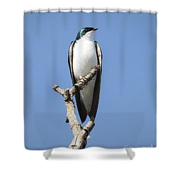 Majestic Shower Curtain by Anita Oakley