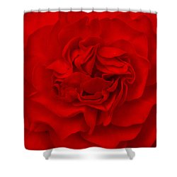 Majestic Begonia  Shower Curtain by Lynn Hughes