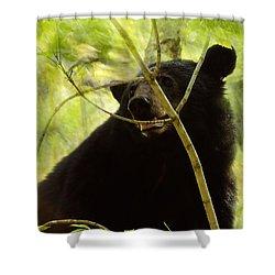 Majestic Black Bear Shower Curtain