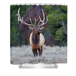 Majestic Bull Elk Shower Curtain by Jack Bell