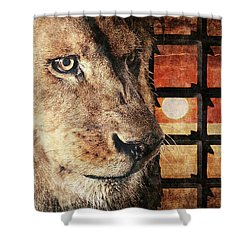 Majestic Lion In Captivity Shower Curtain