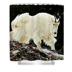 Majestic Mountain Goat Shower Curtain
