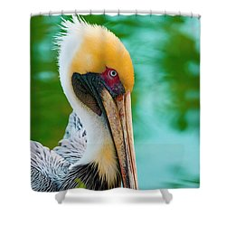 Majestic Pelican 48 Shower Curtain