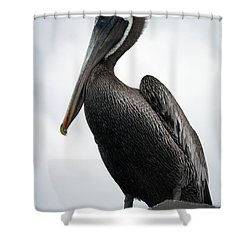 Shower Curtain featuring the photograph Majestic Pelican Photography A10317l by Mas Art Studio
