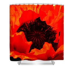 Shower Curtain featuring the photograph Majestic Poppy by Baggieoldboy