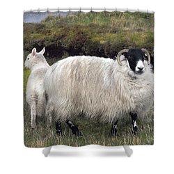 Majestic Ram Of Ireland Shower Curtain