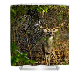Majestic Whitetail Shower Curtain