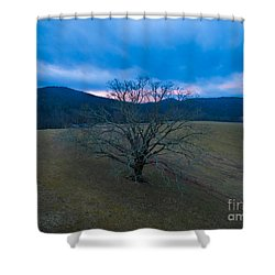 Majestical Tree Shower Curtain by Robert Loe
