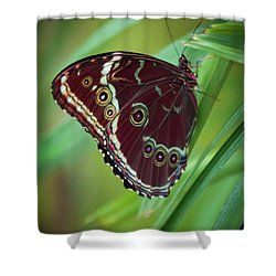 Shower Curtain featuring the photograph Majesty Of Nature by Karen Wiles