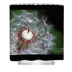 Make A Wish Shower Curtain by Chris Anderson