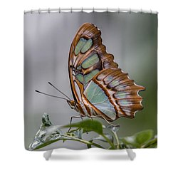 Malachite Butterfly Profile Shower Curtain