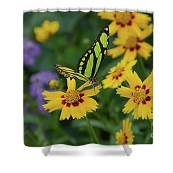 Malachite Butterfly Shower Curtain