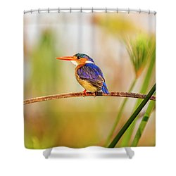 Malachite Kingfisher Hunting Shower Curtain
