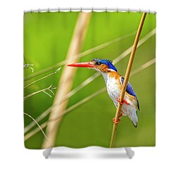 Malalchite Kingfisher Shower Curtain