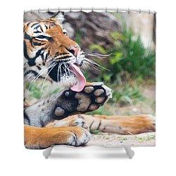 Malayan Tiger Grooming Shower Curtain