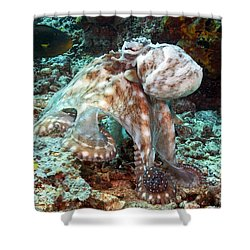 Malaysia, Octopus Shower Curtain by Dave Fleetham - Printscapes