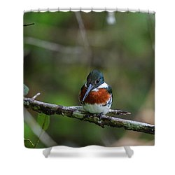 Shower Curtain featuring the photograph Male Amazon Kingfisher by John Haldane