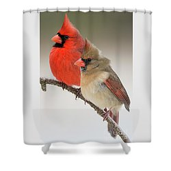 Male And Female Northern Cardinals On Pine Branch Shower Curtain