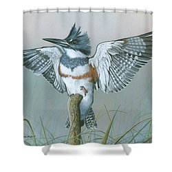 Male Belted Kingfisher Shower Curtain