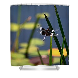 Shower Curtain featuring the photograph Male Broad-bodied Chaser by Brenda Bostic