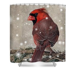Male Cardinal In Snow #1 Shower Curtain