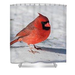 Male Cardinal In Winter Shower Curtain