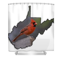 Male Cardinal Perch  Shower Curtain