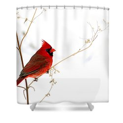 Male Cardinal Posing In The Snow Shower Curtain